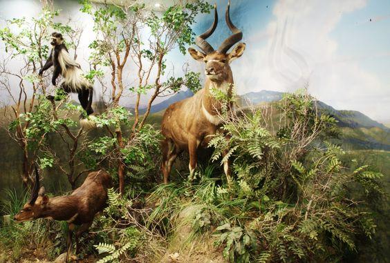Trophy Room – Bakersfield, CA – #10 – Animal Artistry