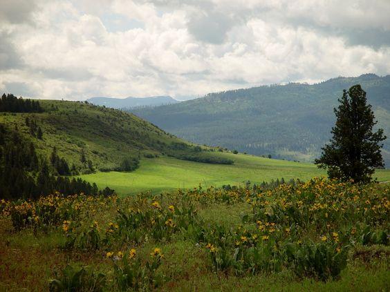 GROWISER, native plants preserve, near La Grande OR