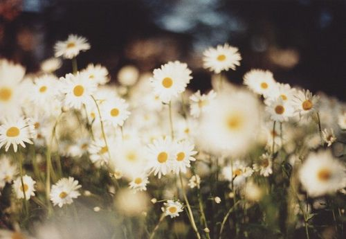"""""""Don't you think daises are the happiest flowers?"""""""