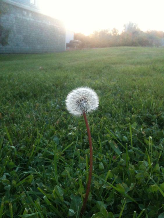 Wishing flower