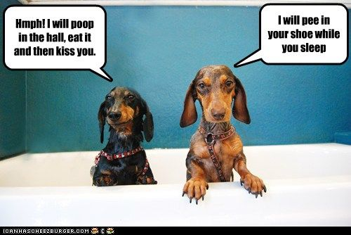 These Dachshunds Aren T A Fan Of Bath Time Apparently Chester