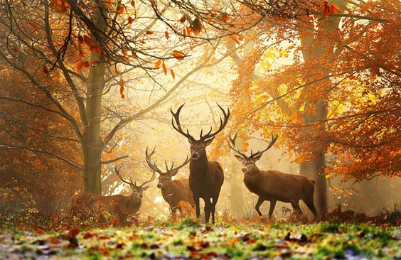 Beautiful-pictures-of-Autumn-Photography5