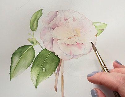 Camelia Japonica. Botanical watercolor illustration