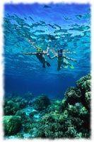 Snorkeling at Makaha Beach Park, Oahu