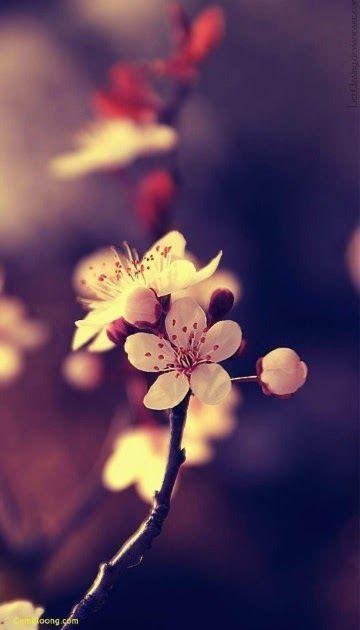 30 Foto Bunga Untuk Profil Wa 100 Wallpaper Keren Whatsapp Terbaru Terlengkap 2019 Download 20 Status Wa Bikin Baper Untu Di 2020 Bunga Sakura Bunga Lukisan Bunga