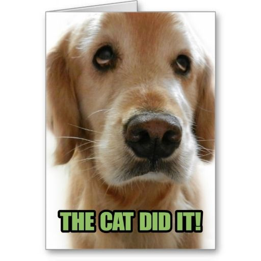 The Cat Did It- Golden Retriever Meme Notecard Greeting Cards | Zazzle