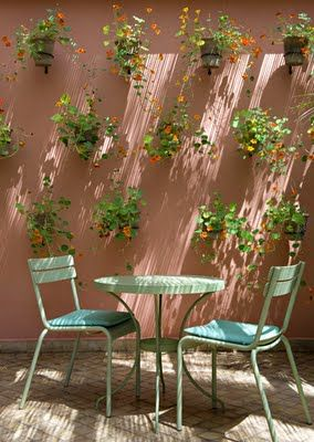 patio walls, Tropaeolum