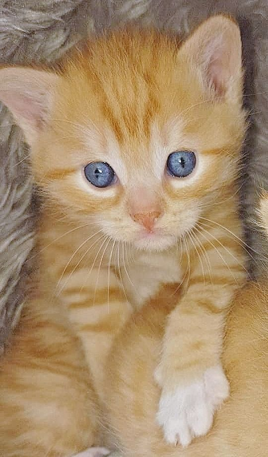 Pin By Jan Riegler On Sweet Cats Beautiful Cats Funny Cat Pictures Tabby Cat