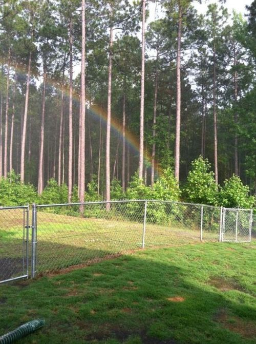 Don't fence me in. Absolutely Madness: Funny Funny, Photographs, Rainbows, Beauty, Don T Fence