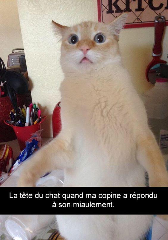 Voici Les 20 Snapchat De Chats Les Plus Droles De Tous Les Temps Image Drole Animaux Animaux Droles Photo Drole Animaux
