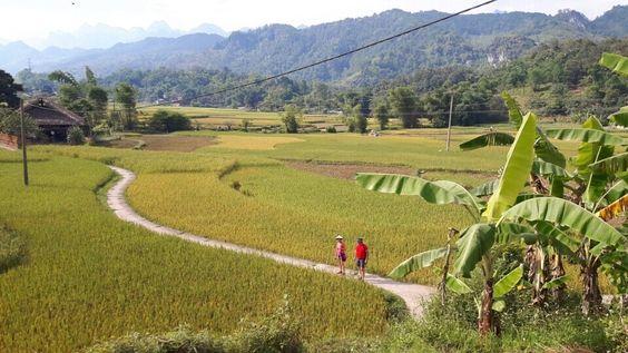Randonnée au milieu des rizièrres à Yen Son. Http://aventure-vietnam.com: