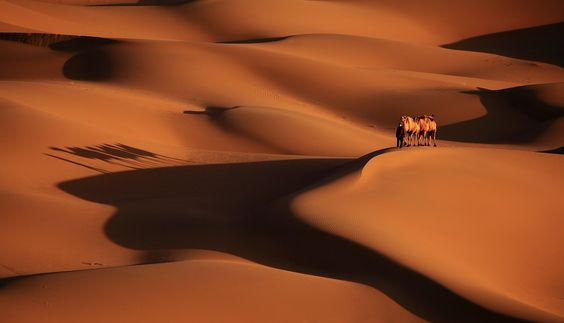 I like the desert lines, they shows different compositions to photographers. It's the masterpiece of God.