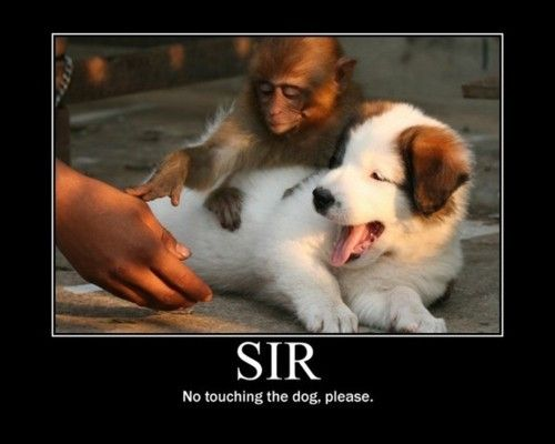 sir, no touching the dog, please.