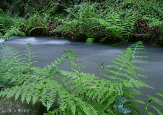 Cascade Falls in Mill Valley