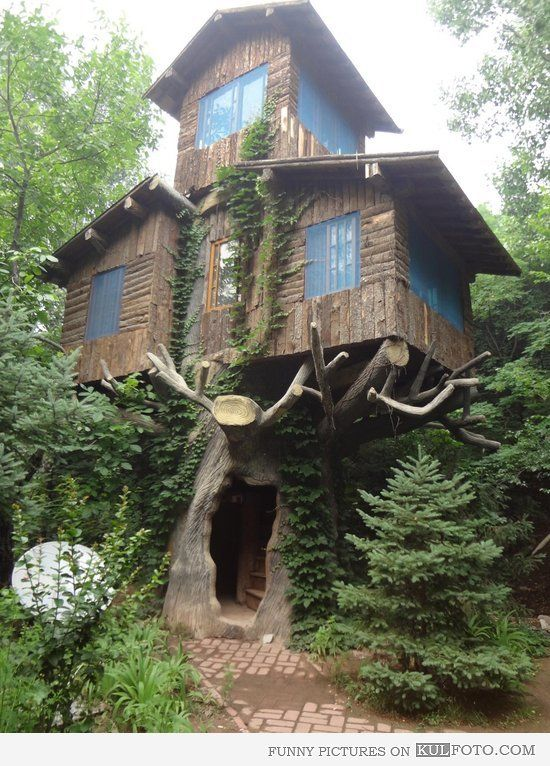 Amazing treehouse built on a hollow tree with stairs inside of the tree. |  Architecture & Houses | Pinterest | Treehouse, Tree houses and Treehouses