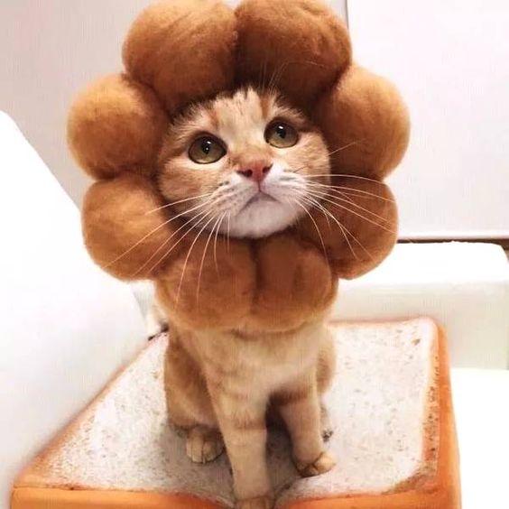 Gato vestido de flor