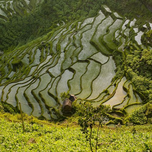 Terrace rice fields, Yunnan, China