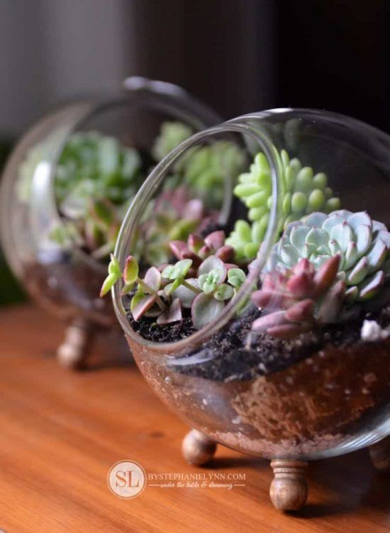 How To Make Terrarium Youtube Video Easy Tutorial Dish Garden