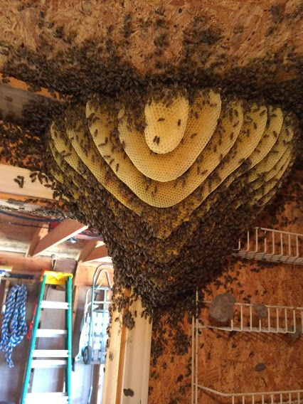 Snuggly shed hive