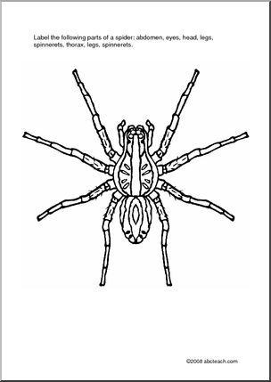 worksheet label the spider label the following parts of a spider abdomen eyes head legs. Black Bedroom Furniture Sets. Home Design Ideas