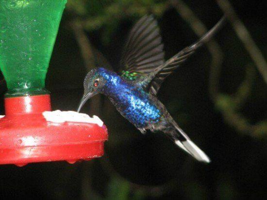 When Do I Take Down My Hummingbird Feeder For The Winter Humming Bird Feeders Unique Bird Feeders Bird Feeders