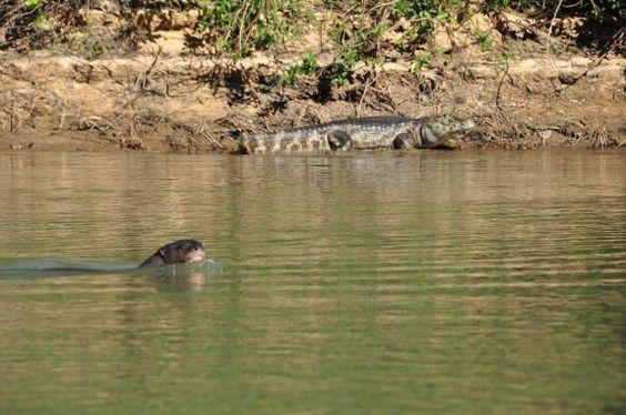Pantanal Norte, Mato Grosso