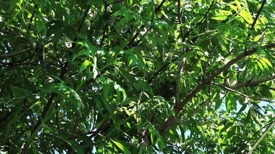 Beacon Food Forest by InterChange Media InterChange Media in