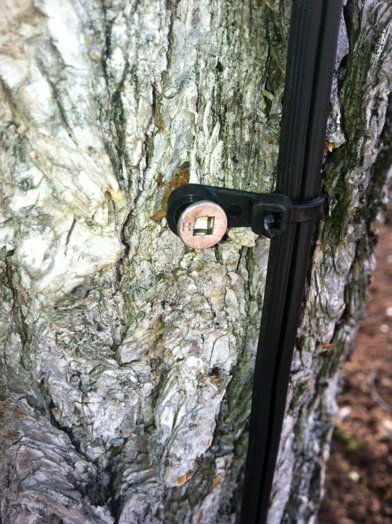 Stainless screw