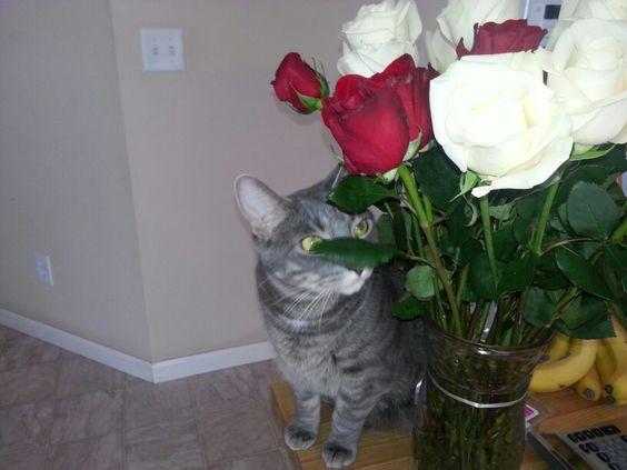 Buster loves fresh flowers. Very noisy