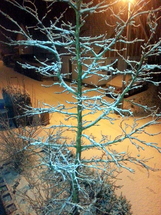 .                                      CASA  COEUR noble: Neuer Schnee, Neues Kleid