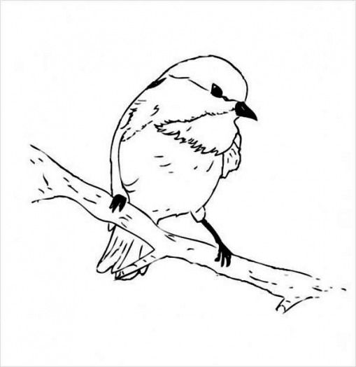 Kidswoodcrafts Bird Coloring Pages Chickadee Black Capped Chickadee