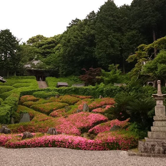 サツキ咲く #ええとこ泉南  #サツキ #林昌寺 #重森三玲 #日本庭園 #sennancity  #Osaka #Japan  #Mireishigemori #Garden #satsuki #azalea 20-minute drive from KIX