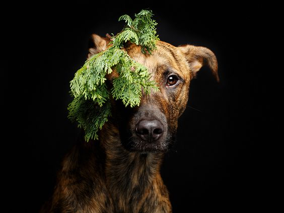 Something green by Elke Vogelsang, via 500px