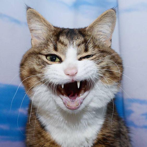 kamu sadar kamera itu biasa kalau kucing sadar kamera luar biasa