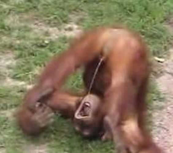 Oh dear, this monkey is taking recycling to extremes! Feel free to insert your own joke below...