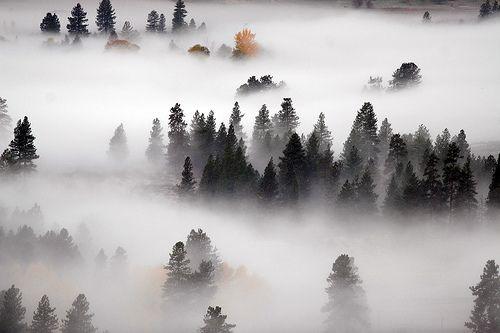 e-aves:    Methow Fog (by Ed.Stockard)