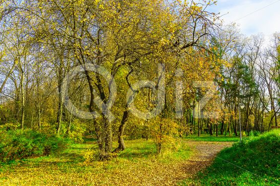 Qdiz Stock Photos | Autumn Trees on Green Grass and Path,  #autumn #background #beautiful #beauty #blue #branch #cloud #colorful #day #dry #environment #fallen #foliage #golden #grass #green #idyllic #land #landscape #leaf #leaves #multicolored #nature #nobody #outdoors #park #path #pathway #plant #scenery #scenic #season #sky #sunlight #sunny #tranquil #tree #view #way #weather #wood #yellow