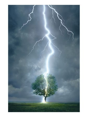 lightening striking tree