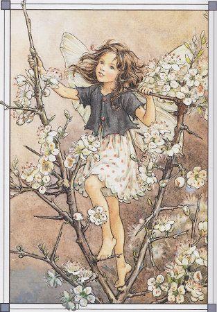 Cicely Baker's Flower Fairies