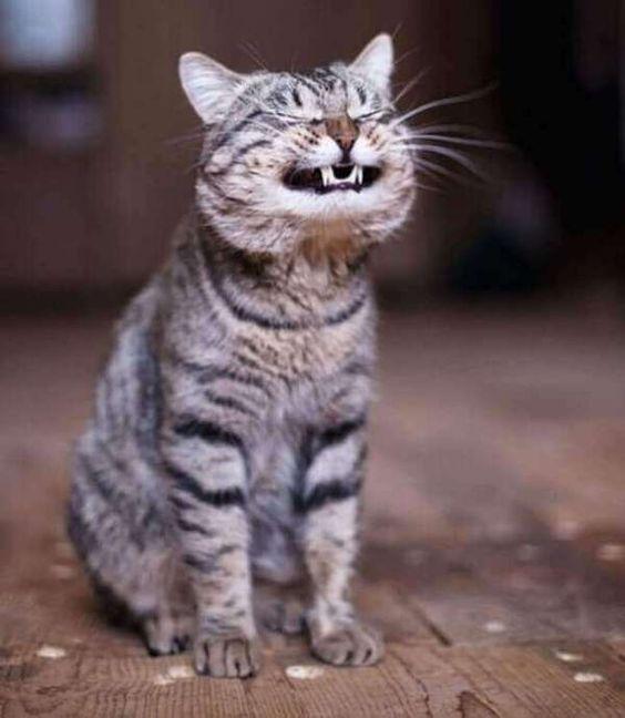 chat-marrant-chat-rigolo-chat-france-funny-cat-kitty-kitten-iages-chats-rigolos-image-drole-chat-foto-de-chat-des-images-de-chat-photo-mignonne-photos-de-petits-chats-humour-chat