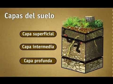 Imagen Relacionada Plants Permaculture