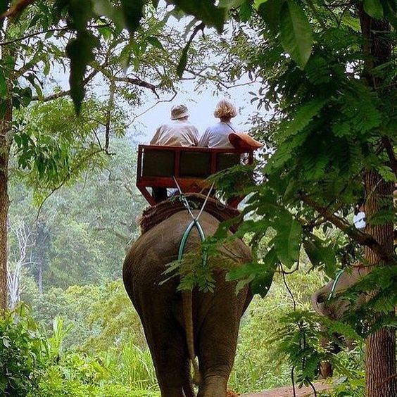 "A-Money on Twitter: ""Help rehabilitate elephants in Thailand https://t.co/h3Jw8Kbs0r https://t.co/lApJCM9nym"""