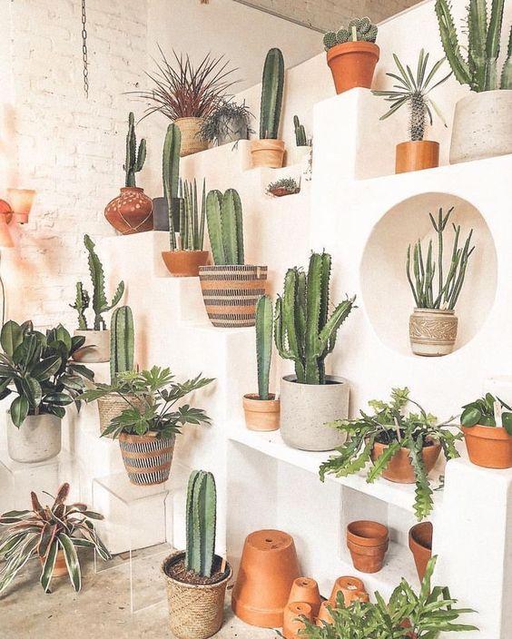 Home Decor 20 Diy Cactus And Succulent Garden Decor Ideas Plant Decor Plant Aesthetic Plant Wall