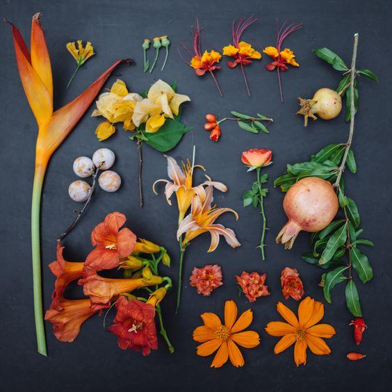 Emilie Blincoe: The Garden Collection: Orange