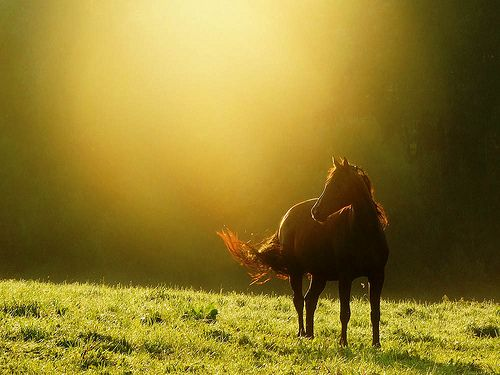 the golden moment a horse