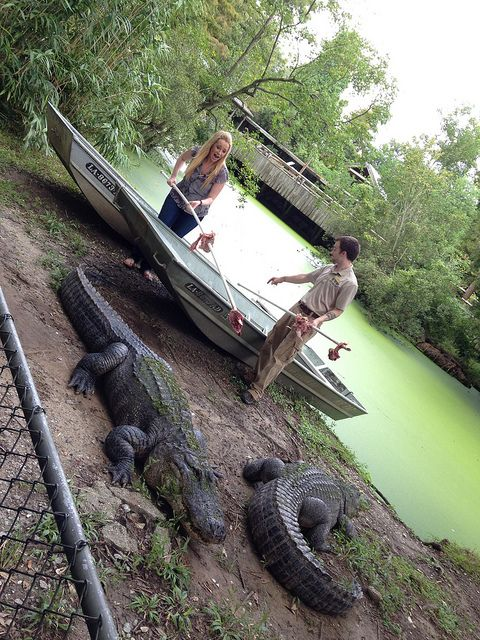Chriss Knight feeding gators | Flickr - Photo Sharing! http://www.realwildanimals.com