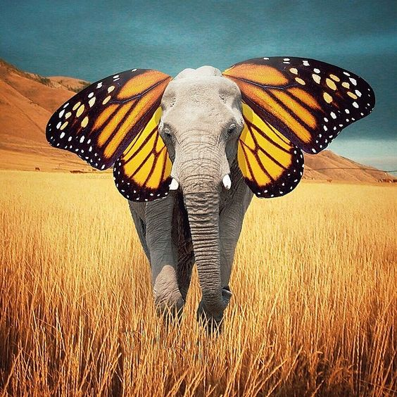 """""""Don't be afraid to be different. That's what makes you beautiful."""" ~The Butterphant Instagram photo by nois7 ..*"""