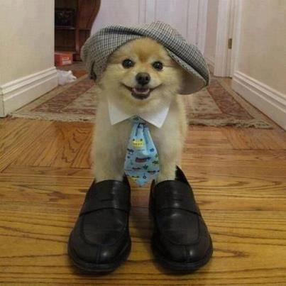 Dog in shoes and bowtie