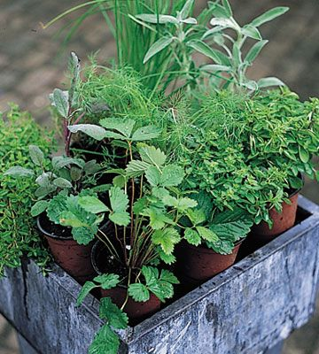 Helpful how-tos on growing herbs. Yes, now is the time!:
