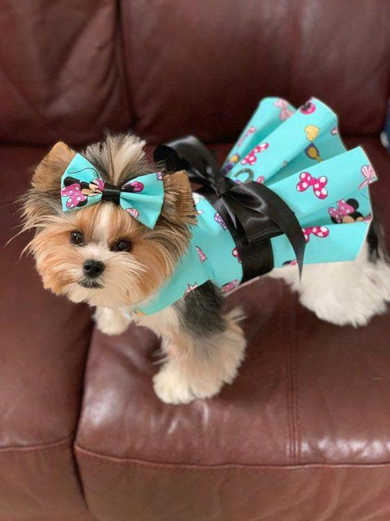 Pin On Dog Grooming Looks Styles